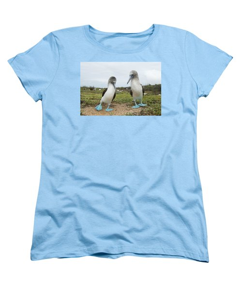 Blue-footed Booby Pair Courting Women's T-Shirt (Standard Cut) by Tui De Roy