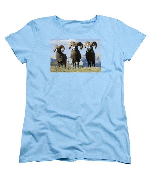 Big Horn Sheep Women's T-Shirt (Standard Cut) by Bob Christopher