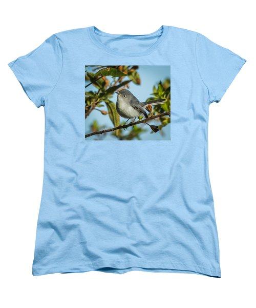 Blue-gray Gnatcatcher Women's T-Shirt (Standard Cut) by Jane Luxton