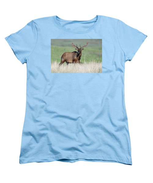 Women's T-Shirt (Standard Cut) featuring the photograph Bull Elk In Velvet by Jack Bell
