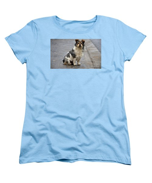 Cute Dog Sits On Pavement And Stares At Camera Women's T-Shirt (Standard Cut) by Imran Ahmed