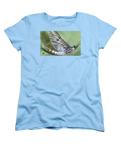 Mayfly Women's T-Shirt (Standard Cut) by Richard Thomas