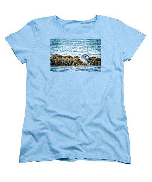 Sweet Seal Women's T-Shirt (Standard Cut) by Cheryl Baxter
