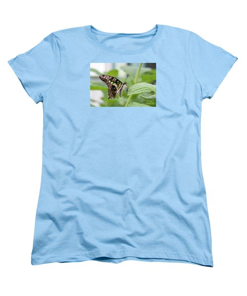 Tailed Jay Butterfly #3 Women's T-Shirt (Standard Cut)