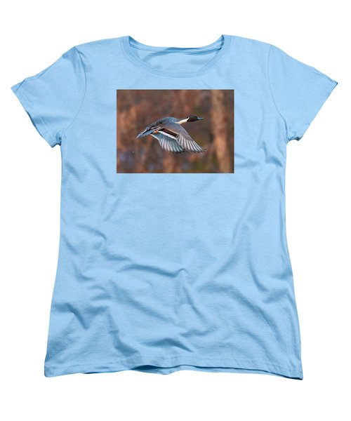 Women's T-Shirt (Standard Cut) featuring the photograph Pintail  by Kelly Marquardt
