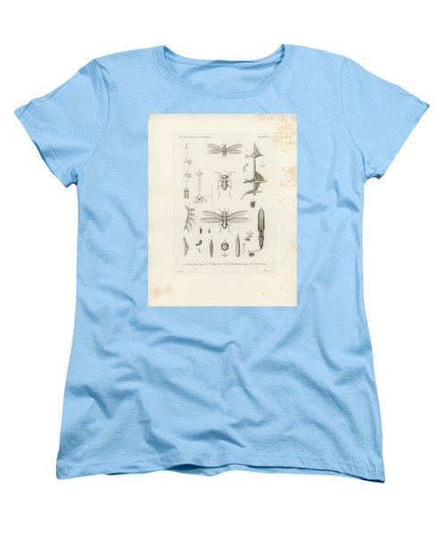 African Termites And Their Anatomy Women's T-Shirt (Standard Cut) by W Wagenschieber