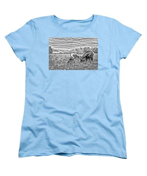 Belted Galloway Beef Cattle Women's T-Shirt (Standard Cut)