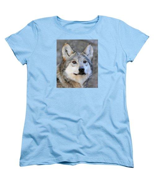 Curious Wolf Women's T-Shirt (Standard Cut) by Elaine Malott