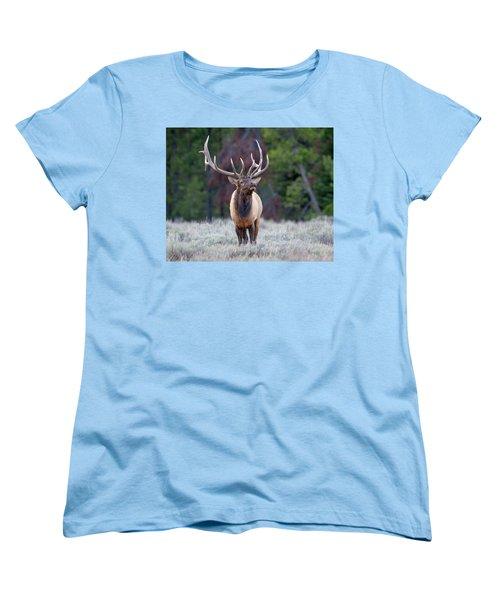 Majestic Bull Elk Women's T-Shirt (Standard Cut) by Jack Bell
