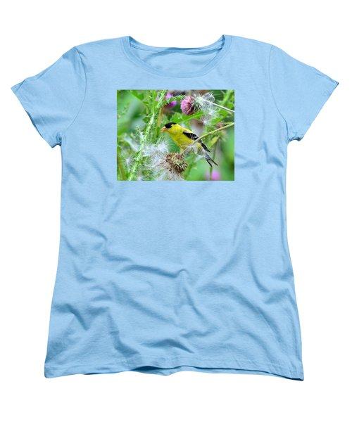 Male Goldfinch Women's T-Shirt (Standard Cut) by Kathy Eickenberg
