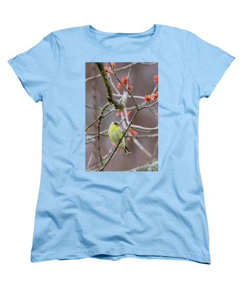 Women's T-Shirt (Standard Cut) featuring the photograph Molting Gold Finch by Bill Wakeley