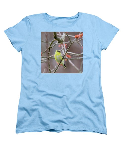 Women's T-Shirt (Standard Cut) featuring the photograph Molting Gold Finch Square by Bill Wakeley