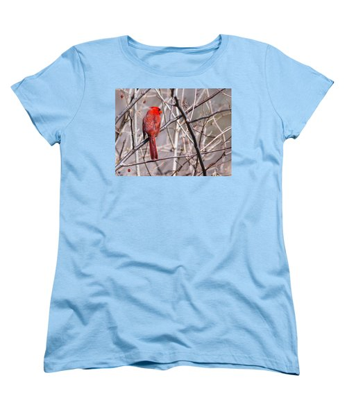 Women's T-Shirt (Standard Cut) featuring the photograph Northern Cardinal In The Sun by Edward Peterson