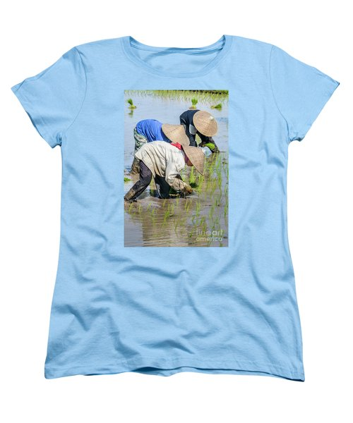 Paddy Field 2 Women's T-Shirt (Standard Cut) by Werner Padarin