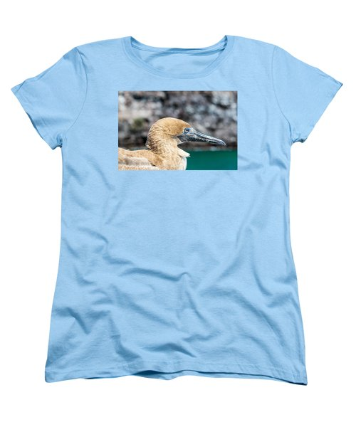 Red Footed Booby Juvenile Women's T-Shirt (Standard Cut) by Jess Kraft