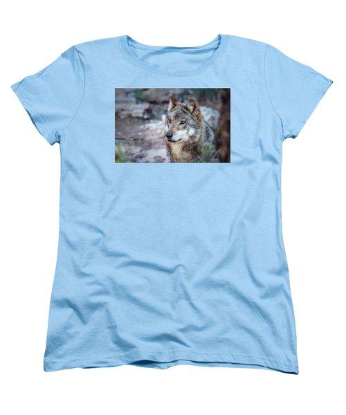 Sancho Searching The Area Women's T-Shirt (Standard Cut) by Elaine Malott