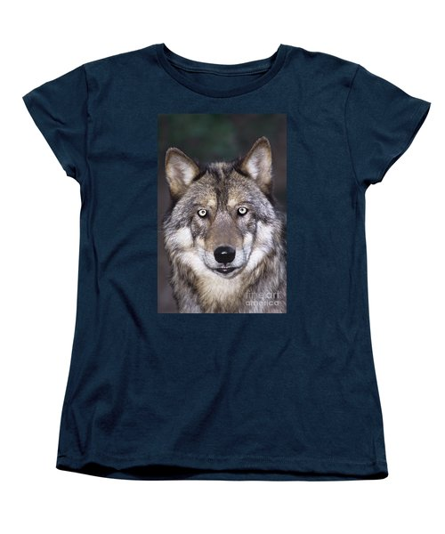 Gray Wolf Portrait Endangered Species Wildlife Rescue Women's T-Shirt (Standard Cut) by Dave Welling