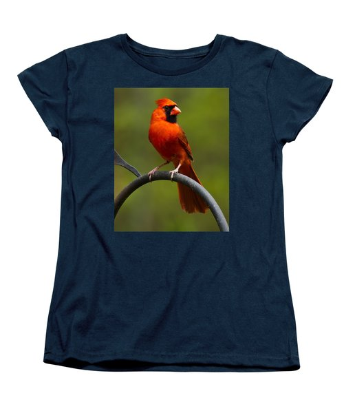 Male Cardinal Women's T-Shirt (Standard Cut) by Robert L Jackson