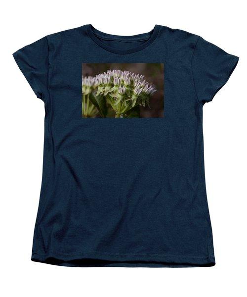 Women's T-Shirt (Standard Cut) featuring the photograph Curtiss' Milkweed #3 by Paul Rebmann