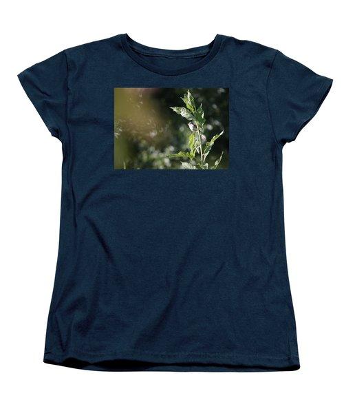 Field Sparrow Women's T-Shirt (Standard Cut) by Melinda Fawver