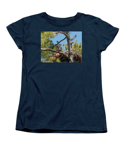 Immature Bald Eagle Women's T-Shirt (Standard Cut) by Brenda Jacobs