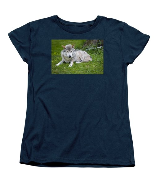 Mexican Gray Wolf Women's T-Shirt (Standard Cut) by Sebastian Musial