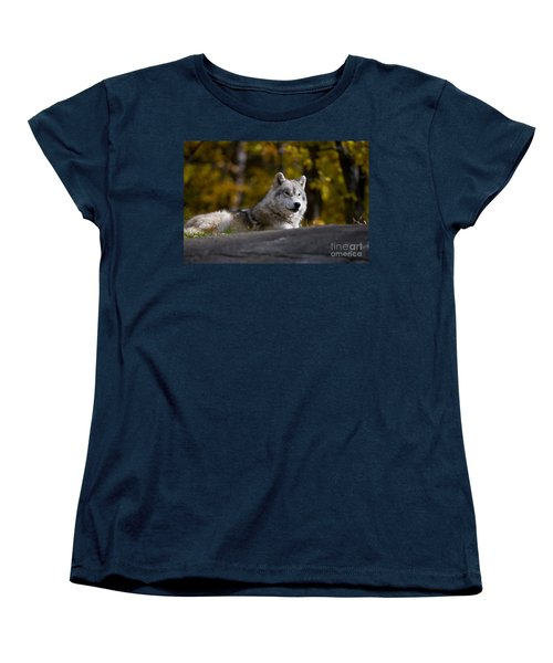 Women's T-Shirt (Standard Cut) featuring the photograph Resting Arctic Wolf On Rocks by Wolves Only