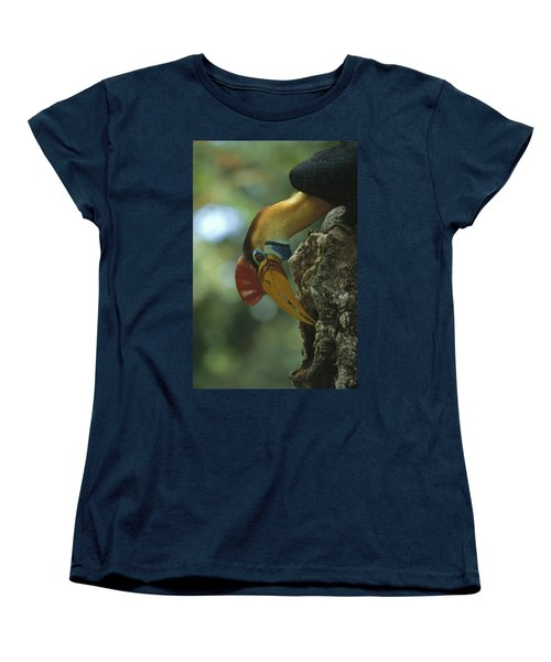 Sulawesi Red-knobbed Hornbill Male Women's T-Shirt (Standard Cut) by Tui De Roy