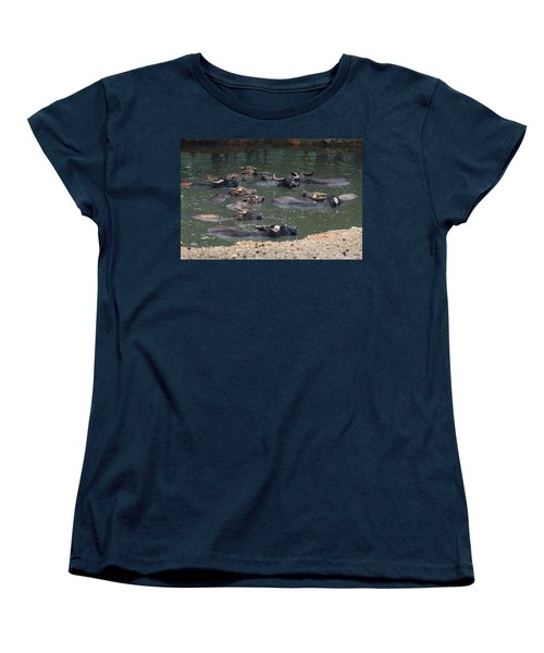 Water Buffalo Women's T-Shirt (Standard Cut)