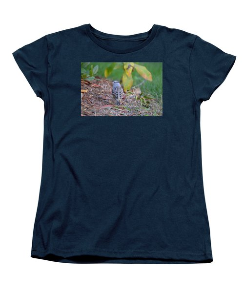 White-crowned Sparrow Women's T-Shirt (Standard Cut) by James Petersen