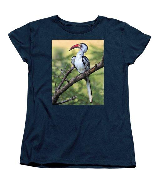 Red-billed Hornbill Women's T-Shirt (Standard Cut) by Tony Beck