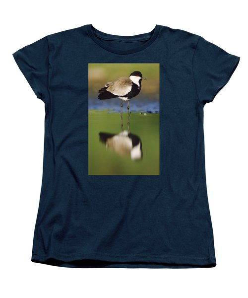Spur Winged Plover With Its Reflection Women's T-Shirt (Standard Cut) by Tim Fitzharris