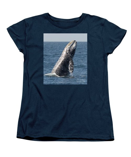 Breaching Gray Whale In Dana Point Women's T-Shirt (Standard Cut)