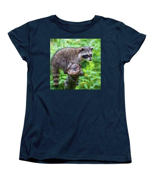 Women's T-Shirt (Standard Cut) featuring the photograph Baby Racoon by Paul Freidlund