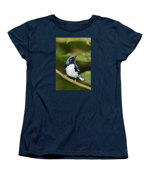 Black-throated Blue Women's T-Shirt (Standard Cut) by Alan Lenk