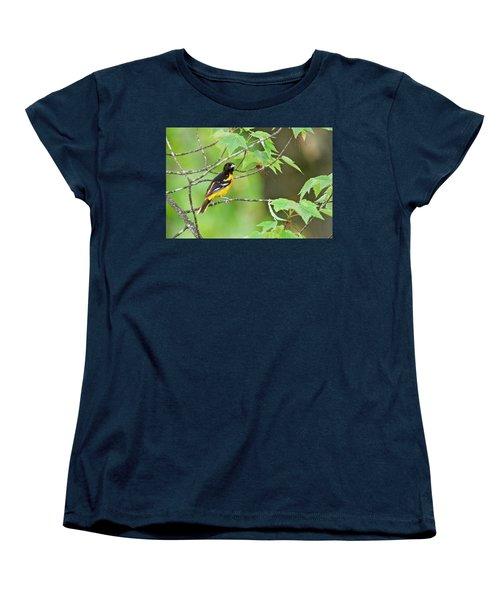Baltimore Oriole Women's T-Shirt (Standard Cut) by Michael Peychich