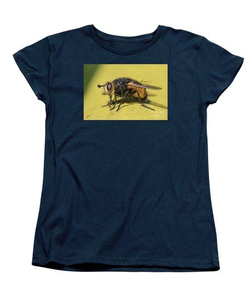 Close Up - Tachinid Fly - Nowickia Ferox Women's T-Shirt (Standard Cut) by Jivko Nakev