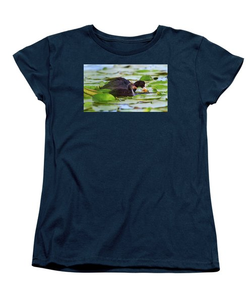 Eurasian Or Common Coot, Fulicula Atra, Duck And Duckling Women's T-Shirt (Standard Cut) by Elenarts - Elena Duvernay photo