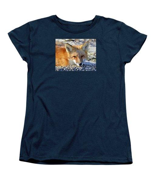 Women's T-Shirt (Standard Cut) featuring the photograph Fox Posing For Me by Sami Martin