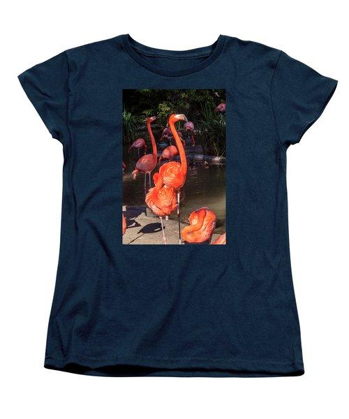 Greater Flamingo Women's T-Shirt (Standard Cut) by Daniel Hebard