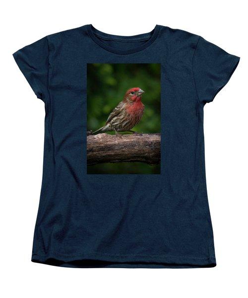 House Finch Women's T-Shirt (Standard Cut) by Kenneth Cole