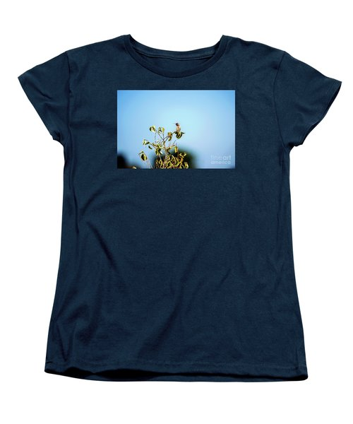 Women's T-Shirt (Standard Cut) featuring the photograph Humming Bird On A Branch by Micah May