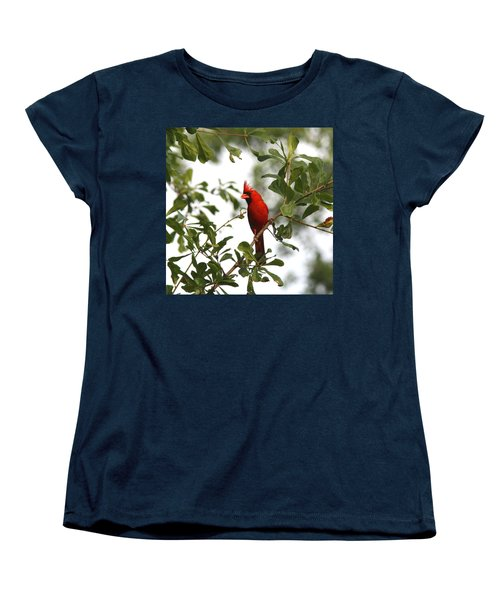Northern Cardinal - In The Wind Women's T-Shirt (Standard Cut) by Travis Truelove