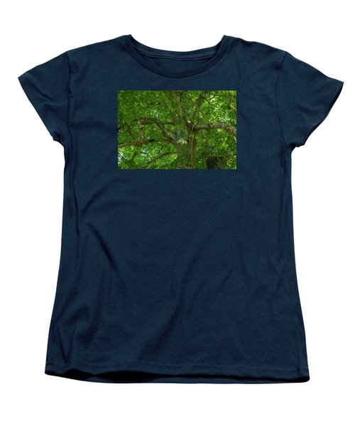 Old Linden Tree. Women's T-Shirt (Standard Cut) by Ulrich Burkhalter