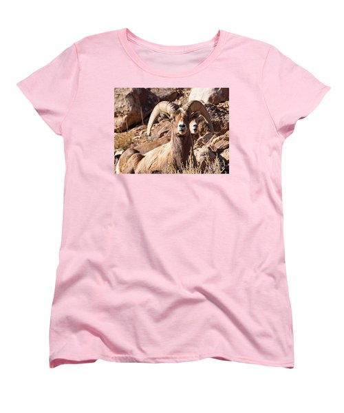Desert Bighorn Sheep Women's T-Shirt (Standard Cut) by Nadja Rider