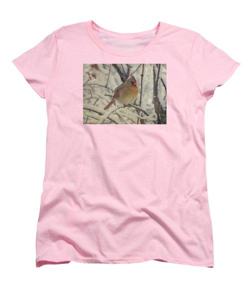 Female Cardinal In The Snow II Women's T-Shirt (Standard Cut) by Sandy Keeton