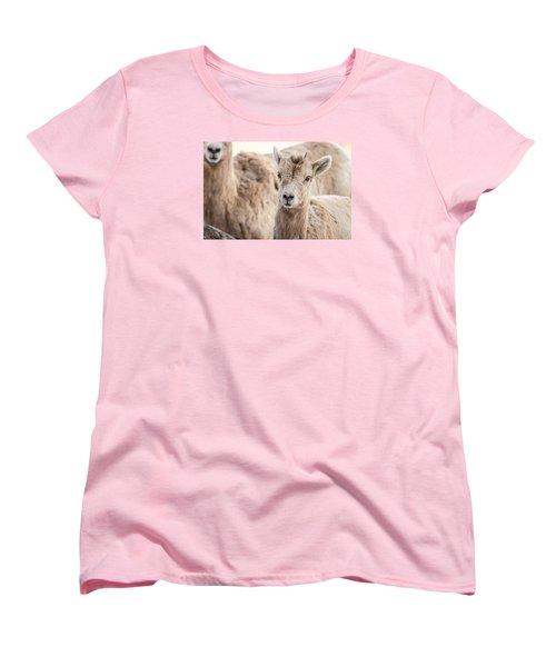Women's T-Shirt (Standard Cut) featuring the photograph A Little Lamb Cuteness by Yeates Photography