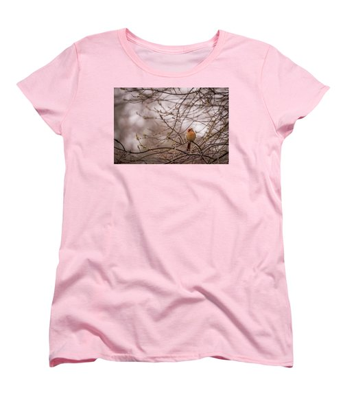 Women's T-Shirt (Standard Cut) featuring the photograph Female Cardinal In Spring 2017 by Terry DeLuco