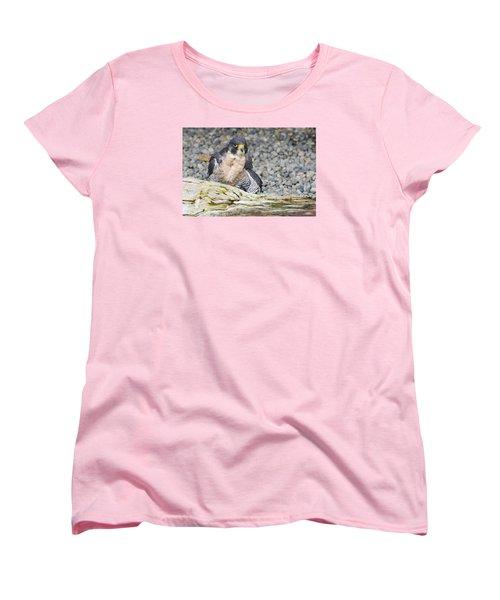 Peregrine Falcon 2 Women's T-Shirt (Standard Cut) by Harold Piskiel