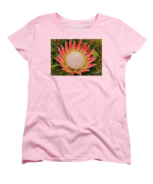 Protea I Women's T-Shirt (Standard Cut) by Cassandra Buckley